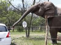 Végre nyit a Magyar Nemzeti Cirkusz Safari Parkja!